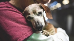 Повышена уголовная ответственность за жестокое обращение с животными