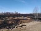 Сжигание сухой травы