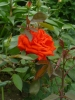 """Конкурс """"Цветочный рай"""" 2013г. Белозерская д. 43"""